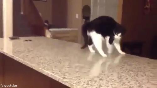「この猫に…何が起きてるの!」04
