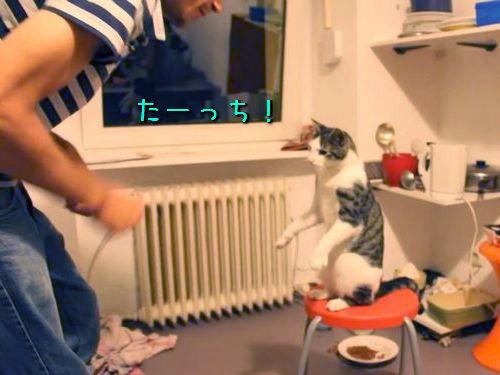 ハイタッチが得意な猫00