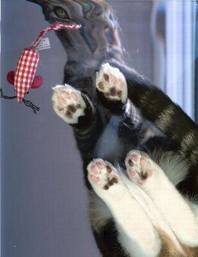 猫スキャン09