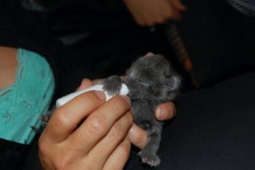 手乗りの動物赤ちゃん05