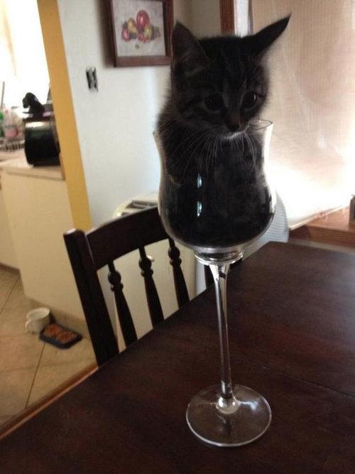 猫は液体説11
