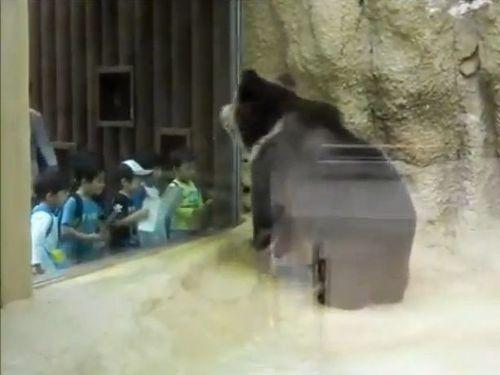 ノリノリのクマ