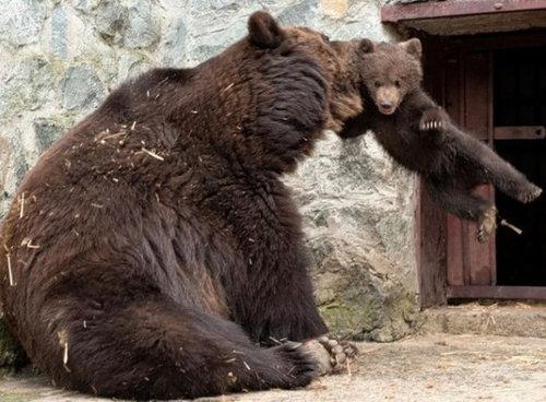 クマの親子02
