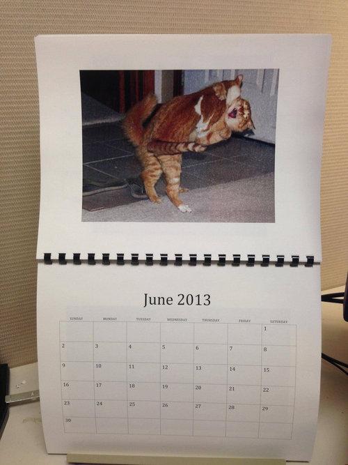 猫のカレンダー06