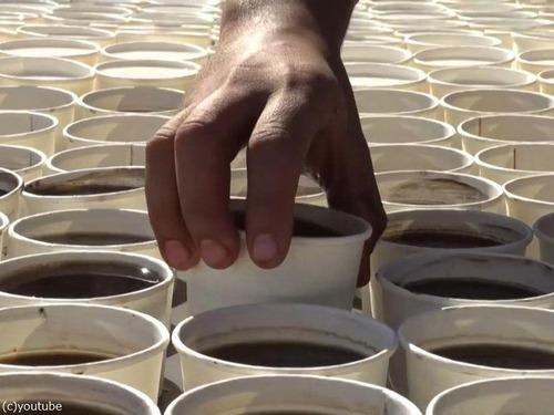 7260杯のコーヒーで「ツタンカーメン」01