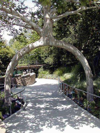 世界の奇妙な木10