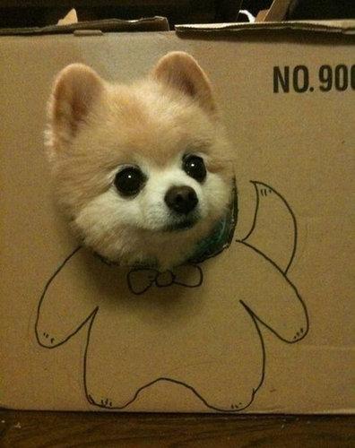 箱好きの犬14