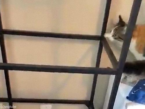 ガラス棚と猫00