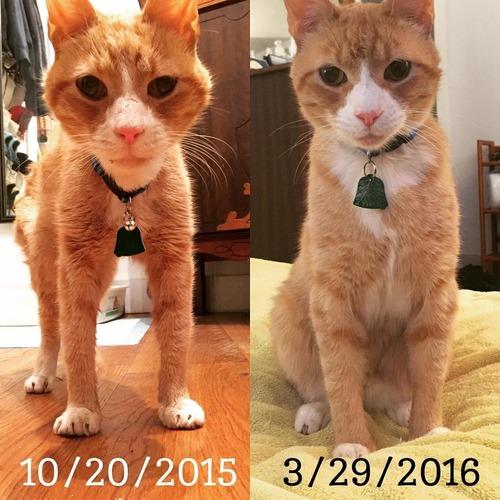 公園で保護した猫の半年後02