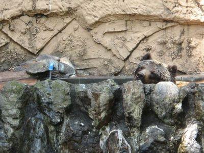クマが釣られたり戦ったりあられもない格好したりする画像06