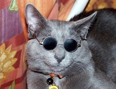 メガネ猫02