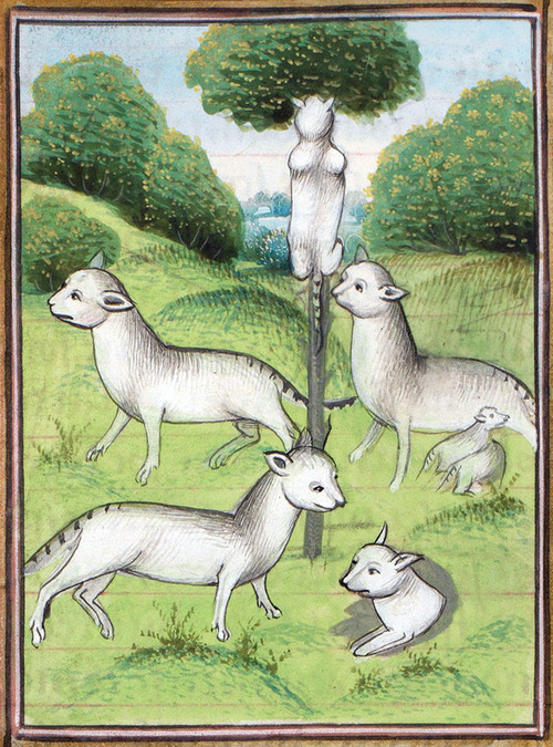 中世の絵画に登場する「猫」13