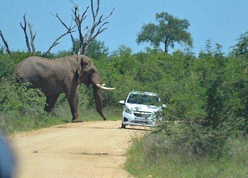 アフリカゾウの恐怖02