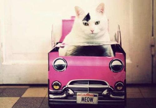 猫と乗り物03