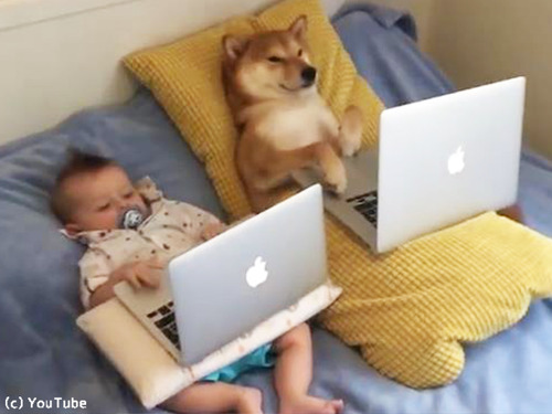 赤ちゃんと一緒にのんびりする柴犬が可愛過ぎ00