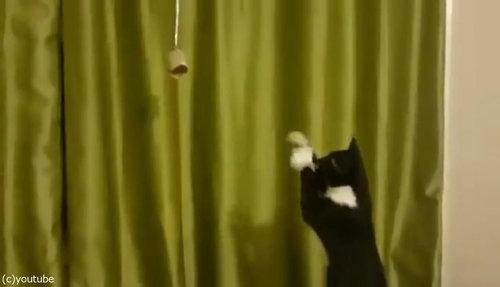 魔法を使いたい猫01