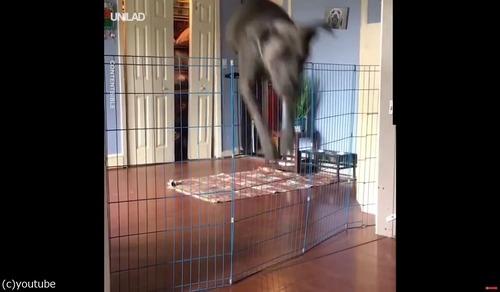「犬の柵で一番効果的なのは」02