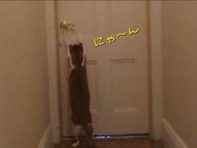 ドア開け猫のトレーニング
