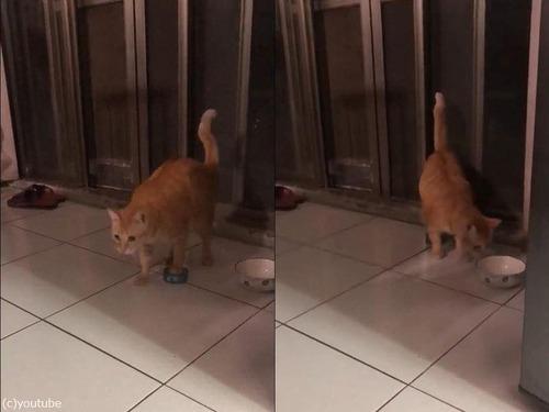 猫缶を引きずる猫03