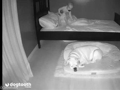 ベッドから降りて犬の隣で寝る赤ちゃん00