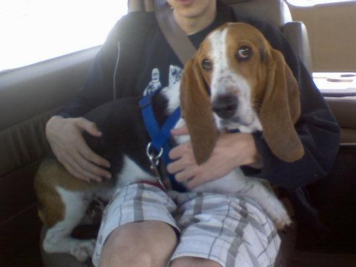 「愛犬は、車に乗るといつもこうする」02