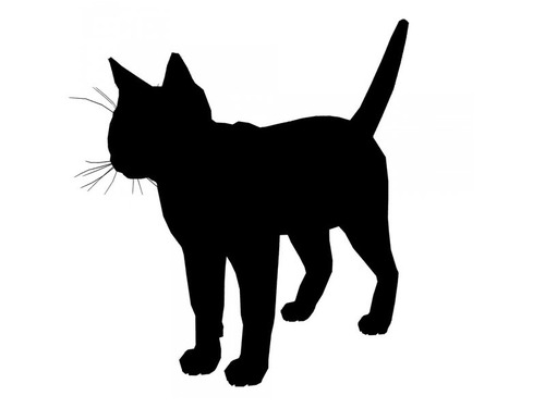 威厳のある猫