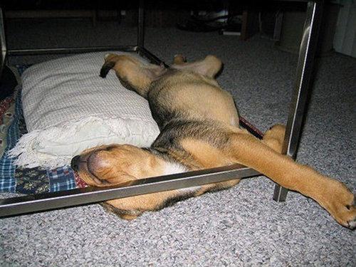 犬の寝相22