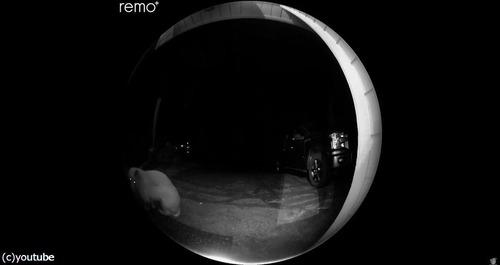 夜中にピンポン…クマだった!06