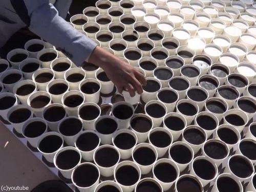 7260杯のコーヒーで「ツタンカーメン」02