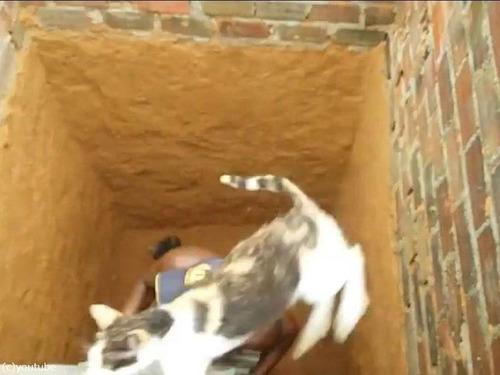 穴の下から猫を救出するつもりが07