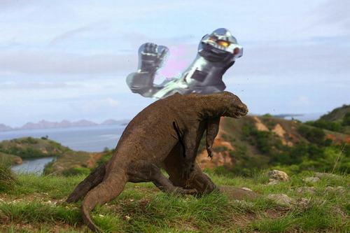 コモドドラゴンのケンカ06