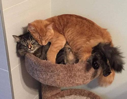 ベッドをシェアしていた子猫2匹05