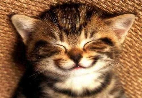 「笑顔 動物」の画像検索結果
