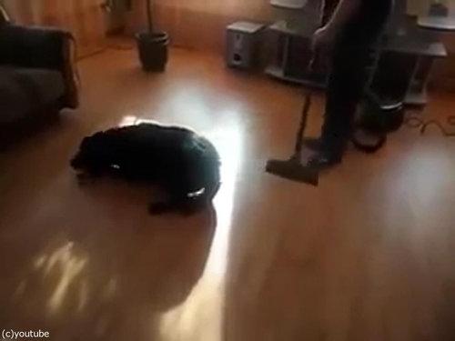 掃除機ラブな犬01