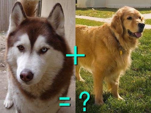犬の混血A 23