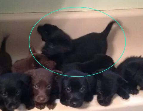 知人の犬が14匹も子犬を生んだ02