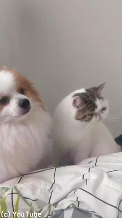 猫への愛情表現が激し過ぎるワンコ04