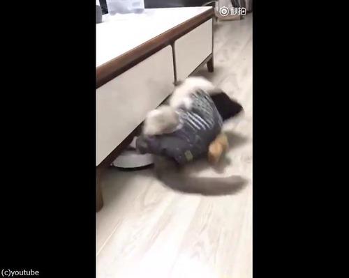 ルンバ猫にまさかのハプニング03