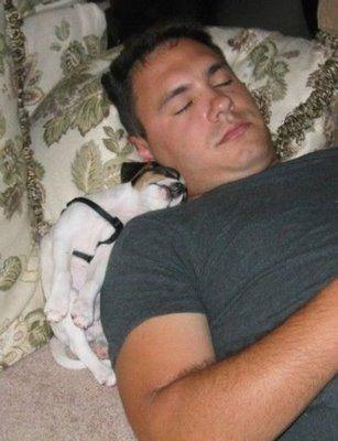寝てる犬02