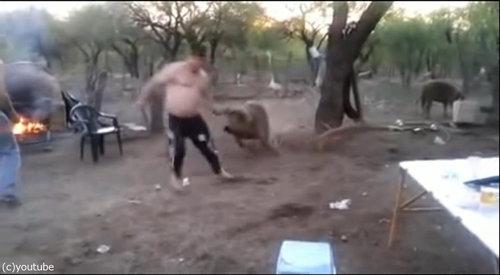 親豚が激怒04