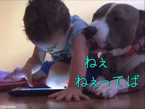 弟と犬とiPad00