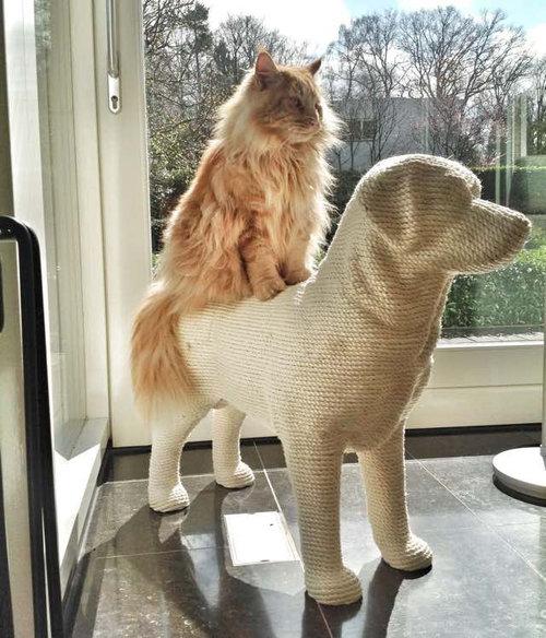 猫のツメとぎを犬の形に08