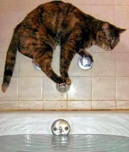 チャレンジャーな猫15