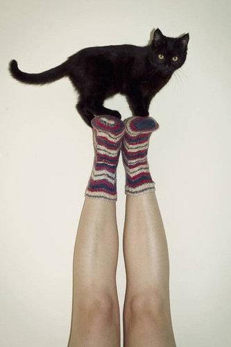 バランス猫06
