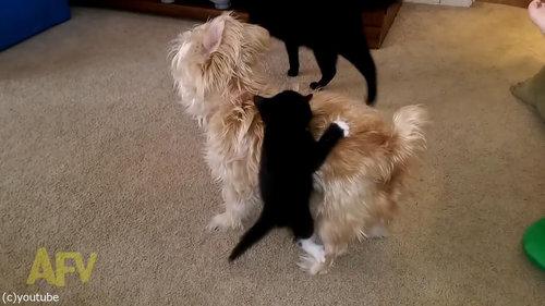 犬の体に子猫がしがみつく03