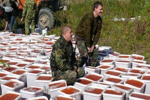 ロシアのイクラ密漁04