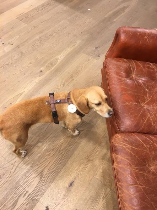 犬に盗難防止タグ01