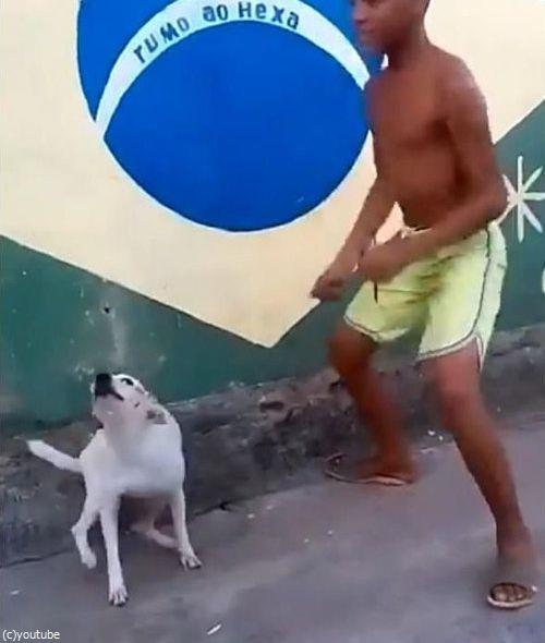 ブラジルは犬だってカーニバル02