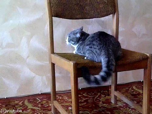猫がイスでアクロバティック01