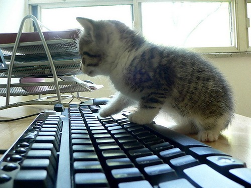猫からキーボードを守る00